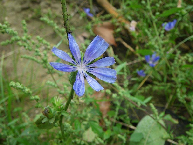 Flowers in the Mincio River Park