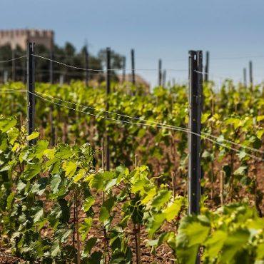 Western Sicily vineyards